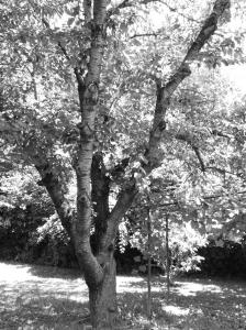 14th Street - Tree